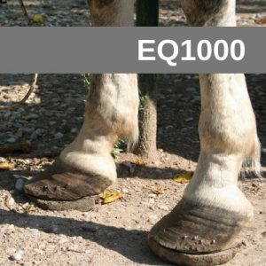 Equine Courses EQ1000