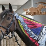 Equine Bodywork & Massage