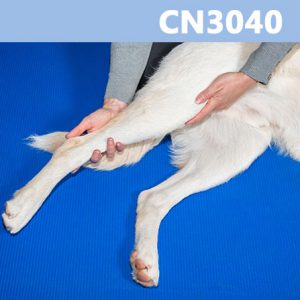 Caninology Course CN3040