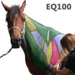 Equine Body Work Certification