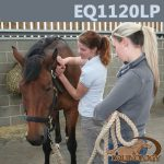 Equine Anatomy EQ1120LP