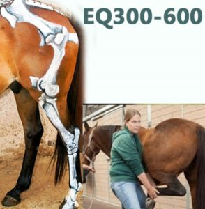 Equinology Course EQ300-600